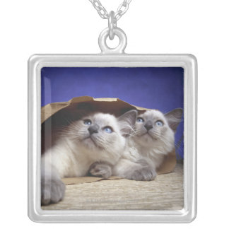 Cats in paper bag silver plated necklace