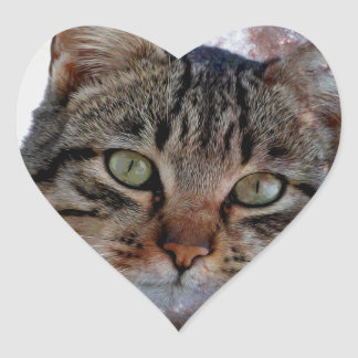 Cats in Space Heart Sticker