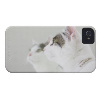 Cats iPhone 4 Covers
