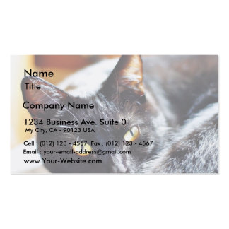 Cats Kitties Kitty Business Card Templates
