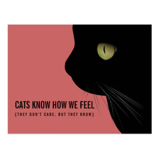 Cats Know How We Feel Funny Postcard
