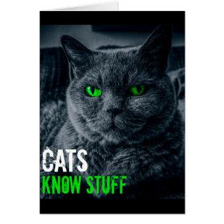 Cats Know Stuff Card