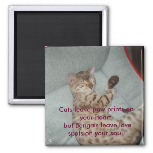Cats leave paw prints on your heart, but... refrigerator magnet