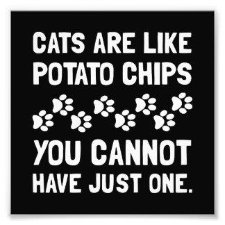 Cats Like Potato Chips Art Photo