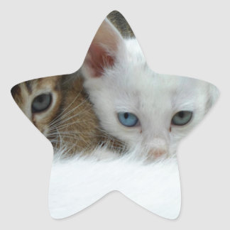 Cats looking cute star sticker