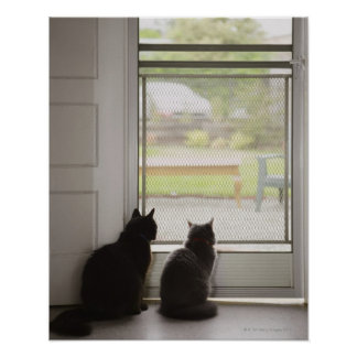 Cats looking out screen door poster