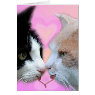 Cats lovers greeting cards