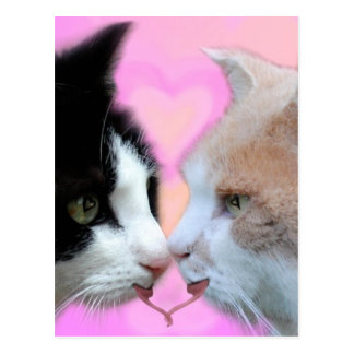 Cats lovers postcards