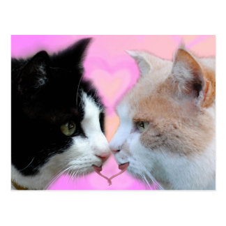 Cats lovers postcard