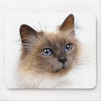 CATS MOUSE MAT