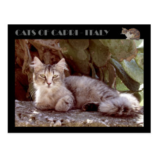 Cats of Capri - Italy Postcard