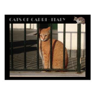 Cats of Capri, red orange tabby cat  - Italy Postcard