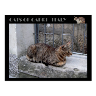 Cats of Capri, tabby cat - Italy Postcard