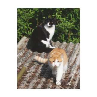 Cats on a Hot Tin Roof Photo Canvas Print