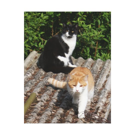 Cats on a Hot Tin Roof Photo Canvas