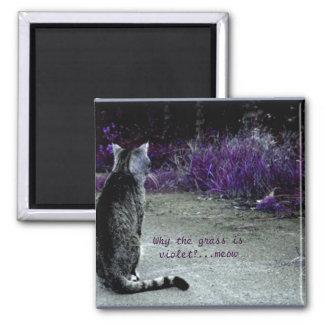 Cat's Philosophy Square Magnet