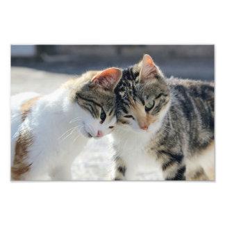 cats photo print