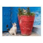 Cats playing around, Rabat, Morocco Postcard