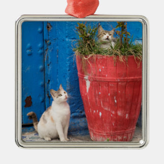 Cats playing around, Rabat, Morocco Silver-Colored Square Decoration