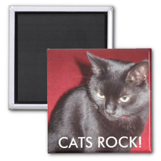 CATS ROCK! SQUARE MAGNET