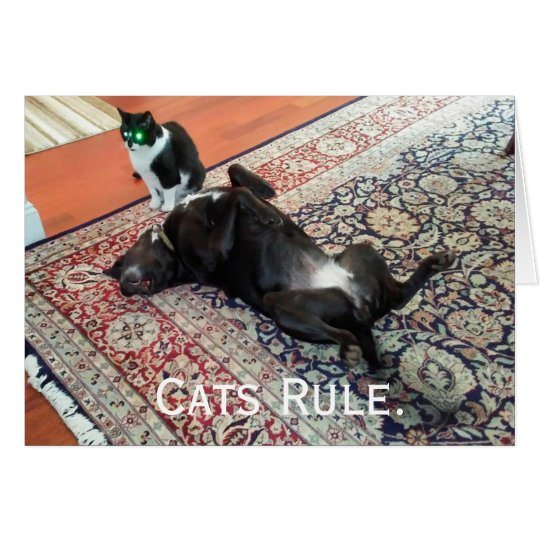 Cats rule, dogs drool greeting card
