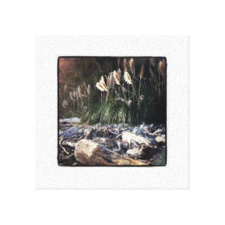 Cattails on a California Beach Stretched Canvas Prints