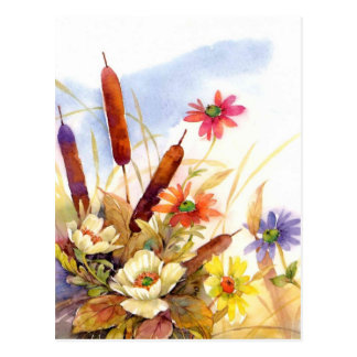 cattails postcard