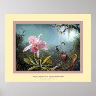 Cattelya Orchid~ Martin Johnson Heade Posters