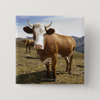 Cattle 15 Cm Square Badge