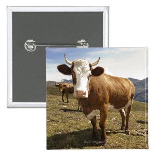 Cattle 15 Cm Square Badge