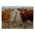 Cattle Birthday Party Humour Card