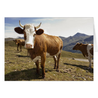 Cattle Card