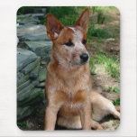 Cattle Dog Mouse Pad