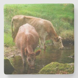 Cattle Golitha Falls River Fowey Cornwall England Stone Coaster