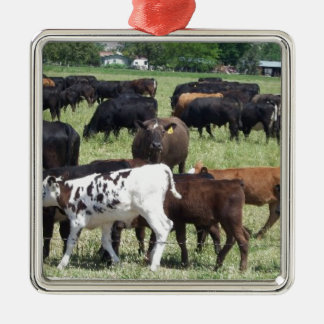 Cattle Herd Silver-Colored Square Decoration