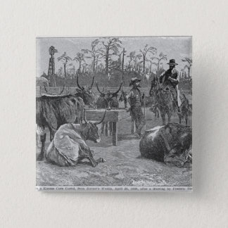 Cattle in a Kansas Corn Corral 15 Cm Square Badge