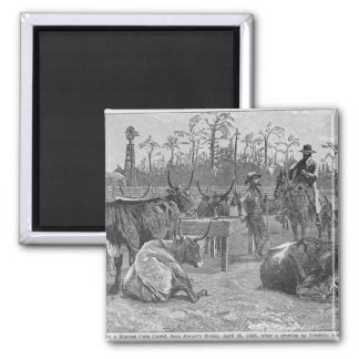 Cattle in a Kansas Corn Corral Square Magnet