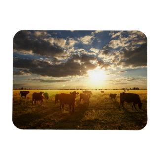 Cattle In Field, Sunset Magnet