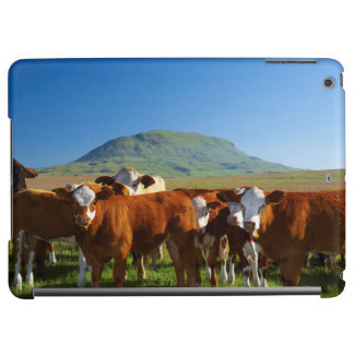 Cattle In Kamberg Valley, Kwazulu-Natal