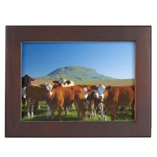 Cattle In Kamberg Valley, Kwazulu-Natal Keepsake Box