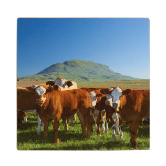 Cattle In Kamberg Valley, Kwazulu-Natal Wood Coaster