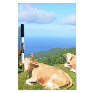 Cattle in the Azores. Dry Erase White Board