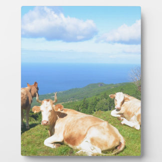 Cattle in the Azores. Plaque