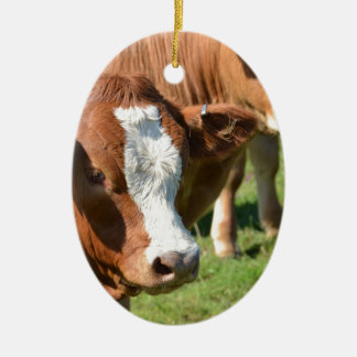 Cattle in the Isles of Scilly Christmas Ornament