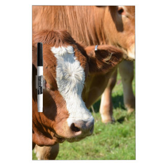 Cattle in the Isles of Scilly Dry Erase Whiteboards