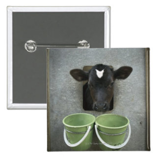 Cattle, Individual Pen 15 Cm Square Badge