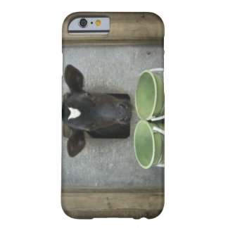 Cattle, Individual Pen Barely There iPhone 6 Case
