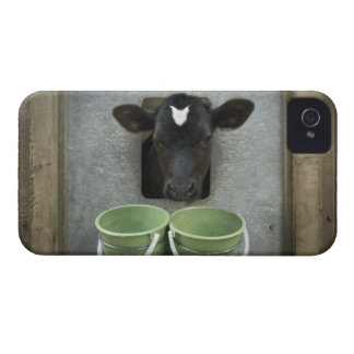 Cattle, Individual Pen iPhone 4 Case