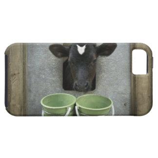 Cattle, Individual Pen iPhone 5 Case