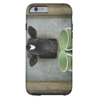 Cattle, Individual Pen Tough iPhone 6 Case